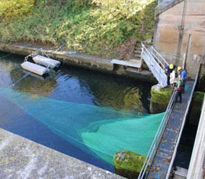 Fish protection and downstream fish passage measurements