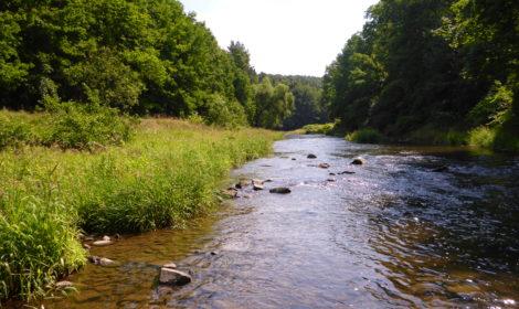 Monitoring, aquatic ecology investigations & data analysis